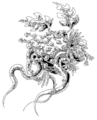 Flowers and tentacles - thumbnail