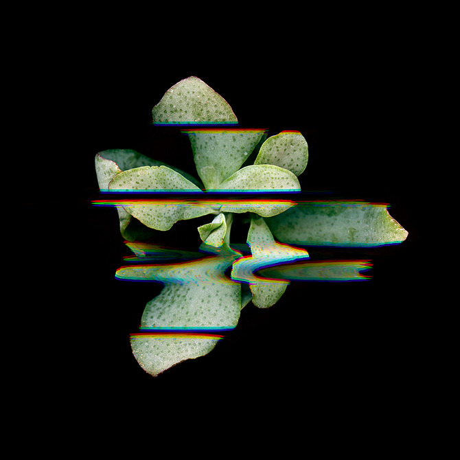Digitized plants No.2.
