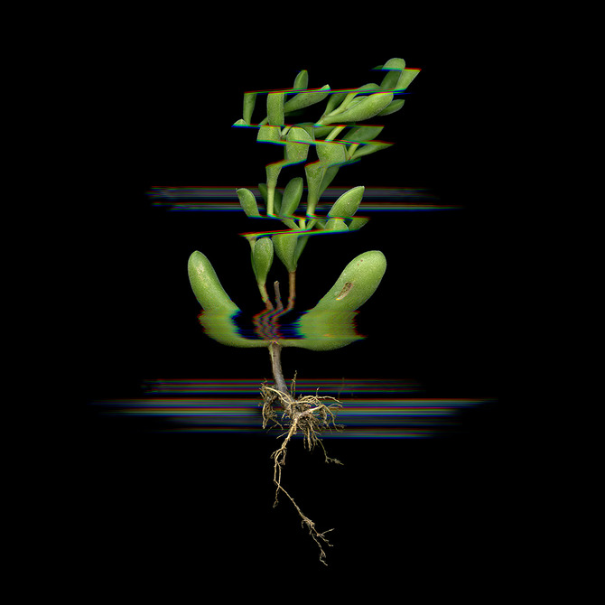 Digitized plants No.19.