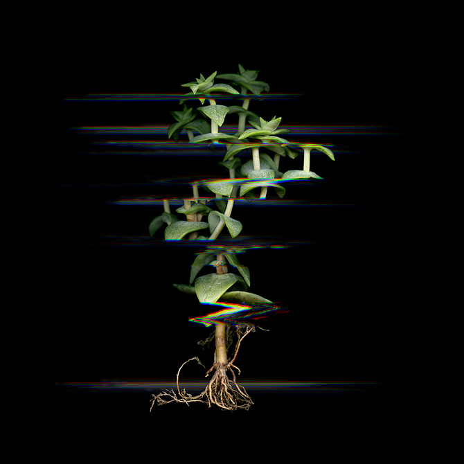 Digitized plants No.15.