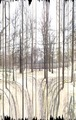 Perspective studies II. - Seeing the wood for the trees - thumbnail